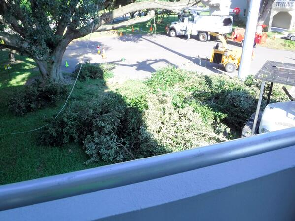 Balcony View of Tree Trimmers