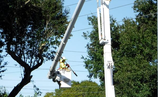 Hiring Tree Workers in Clearwater Florida