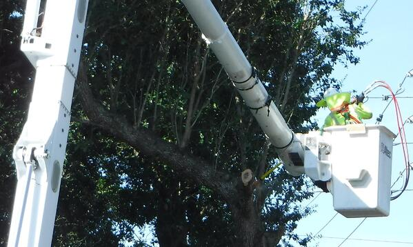 We Hire Tree Trimmers in Florida