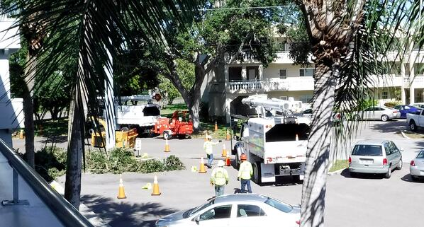 Utility Tree Removal Florida