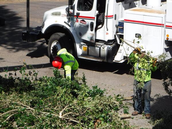 We Hire Vegetation Managers in Florida