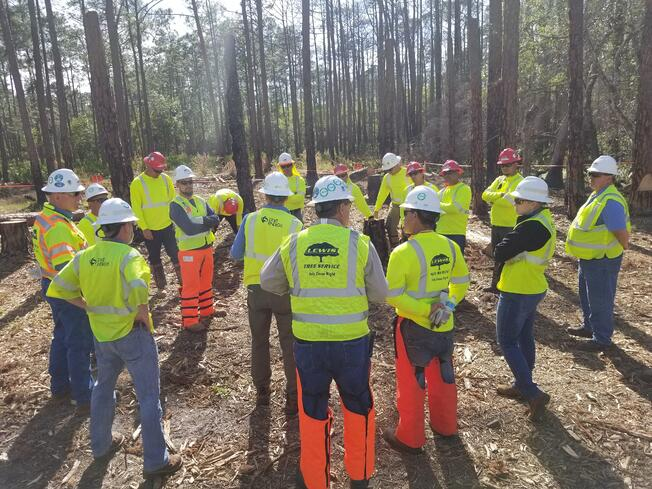 Tree Felling Training for Utility Line Clearance