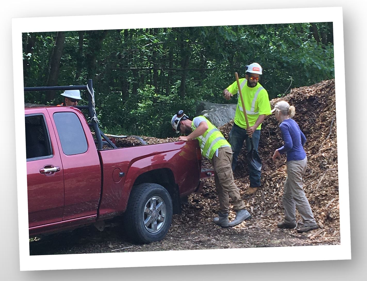 Free wood chips and free tree worker help